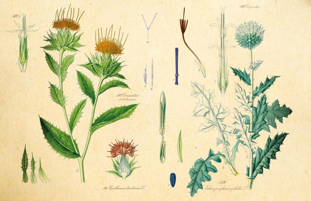 Pressebild Pflanzen